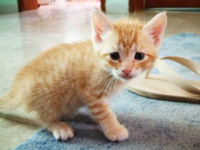 Котенок на ковре