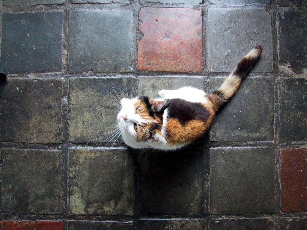 Кошка на плитке