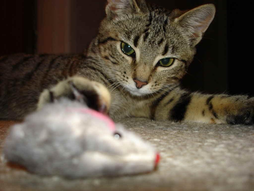 Кошка и мышка