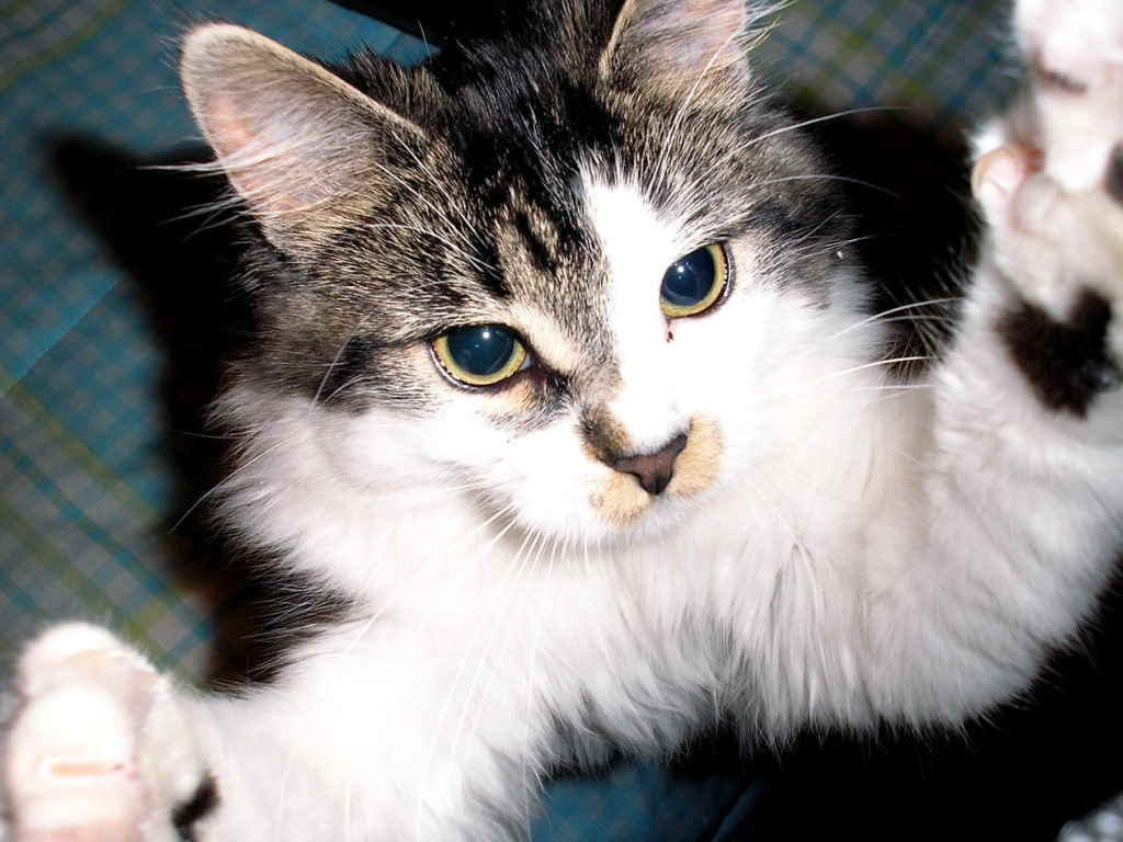 Объятия кошки