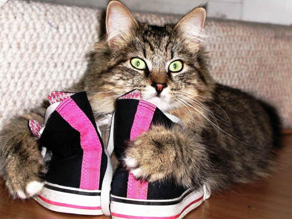Кот и обувь