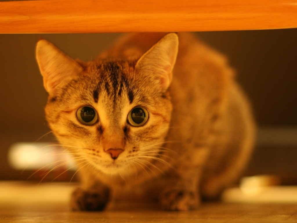 Кошка напугана