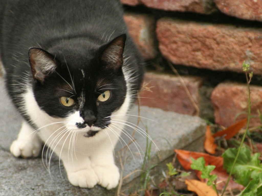 Кот на бетоне