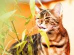 Кошка кушает траву