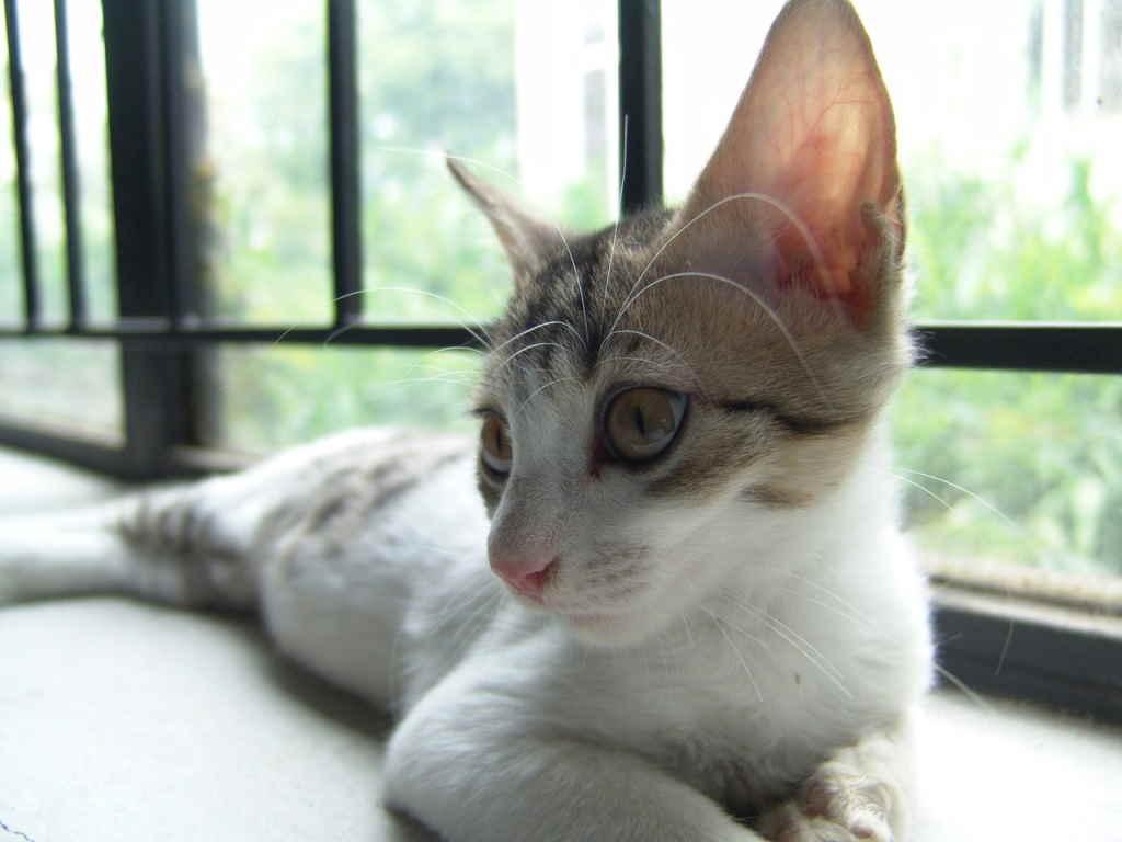 Котенок у окна