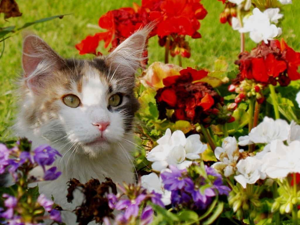 Кот в цветнике