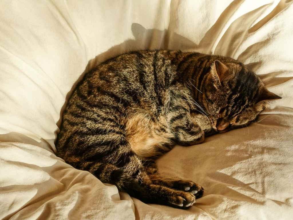 Как приучить кота спать с хозяином