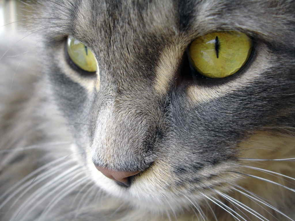 Глаза кошки