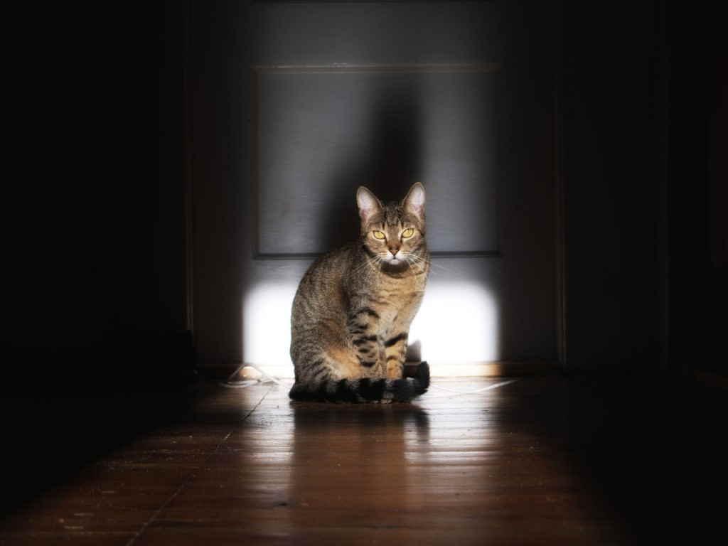 Кот у двери
