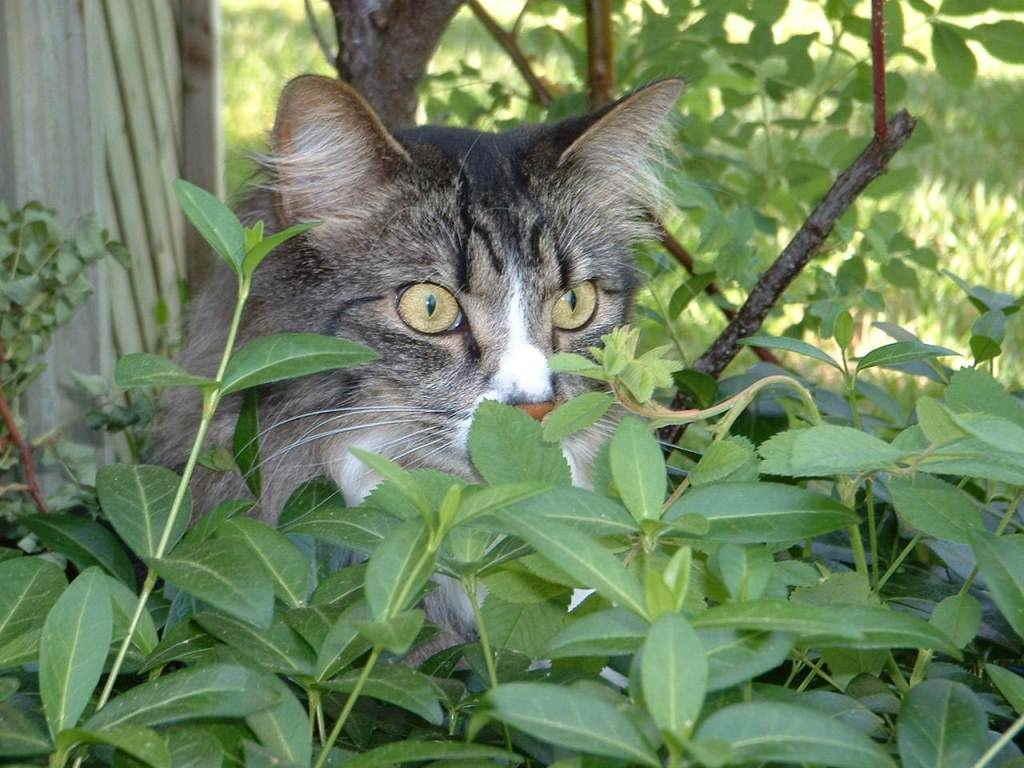 Кот за листьями