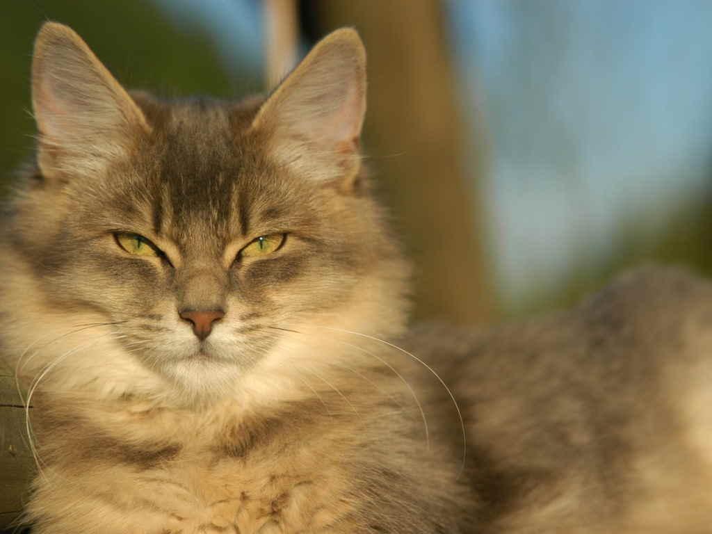 Кот на солнце