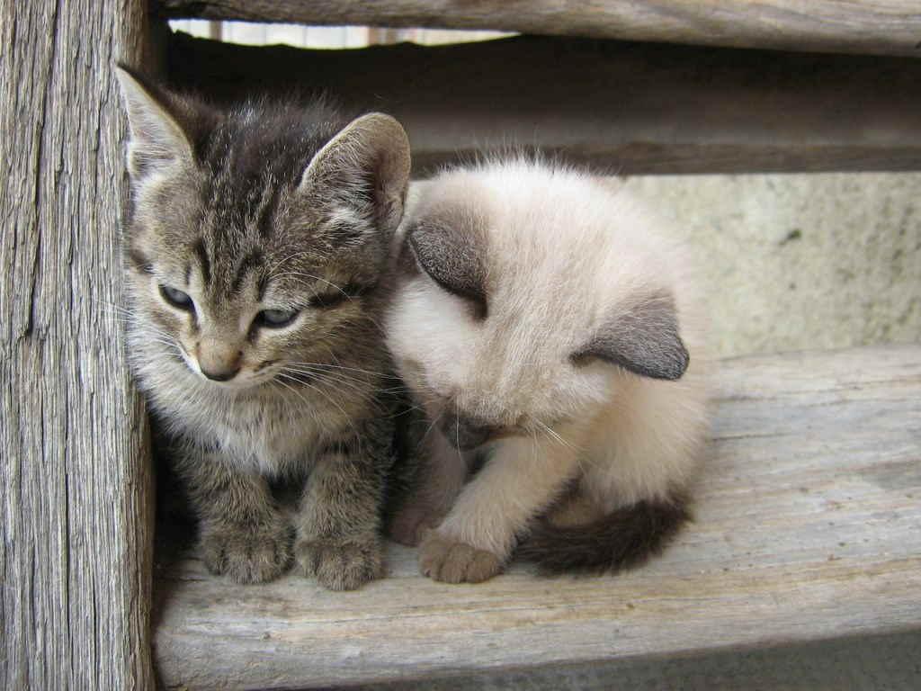 Котята на лестнице