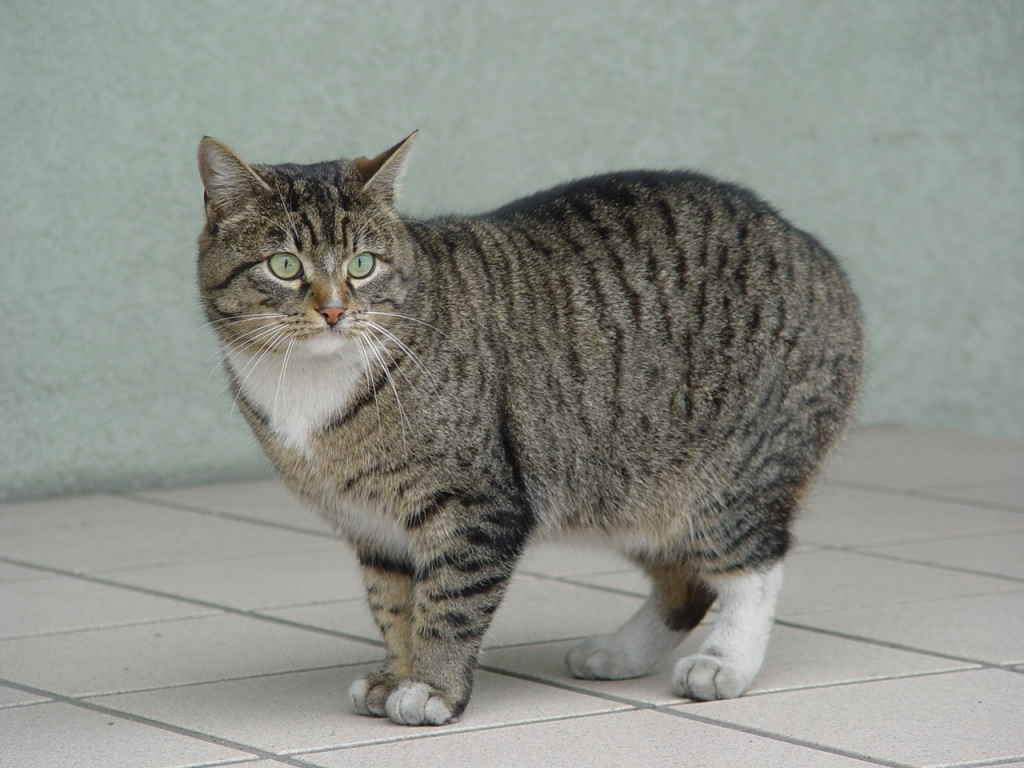Кошка остановилась