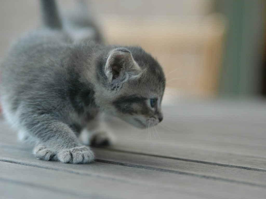 Котенок ходит