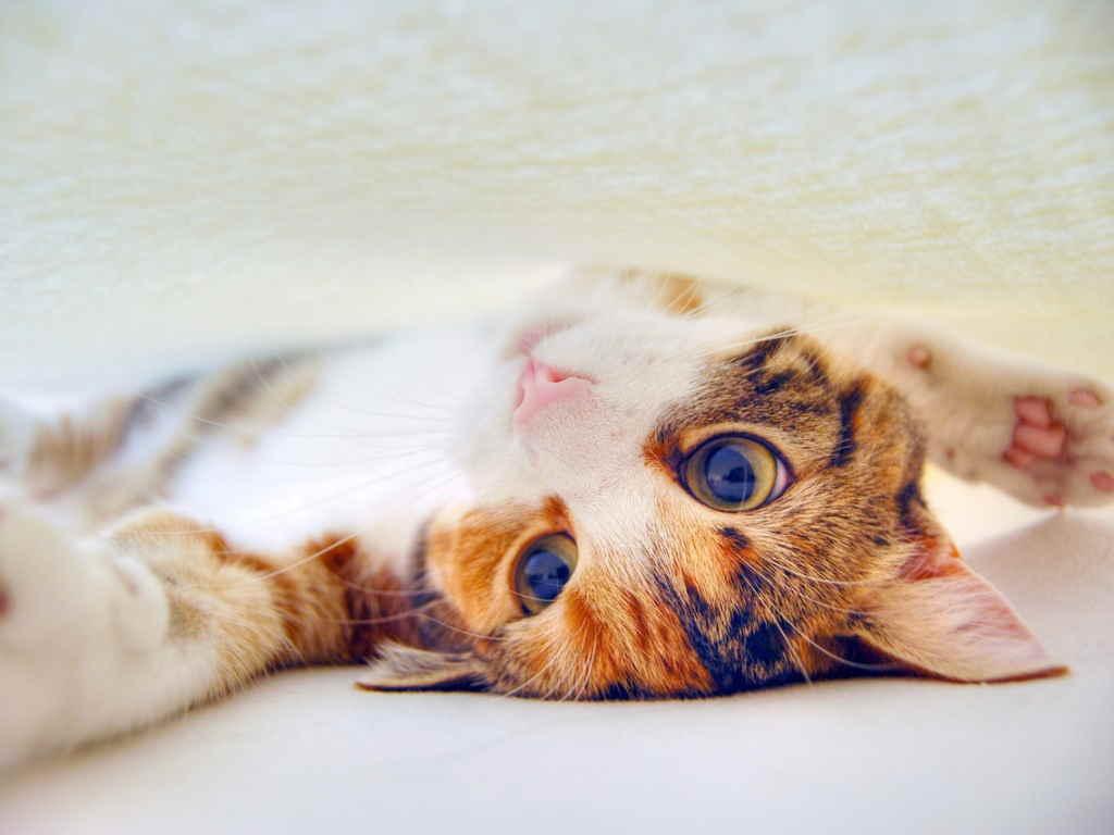 Котенок на спине