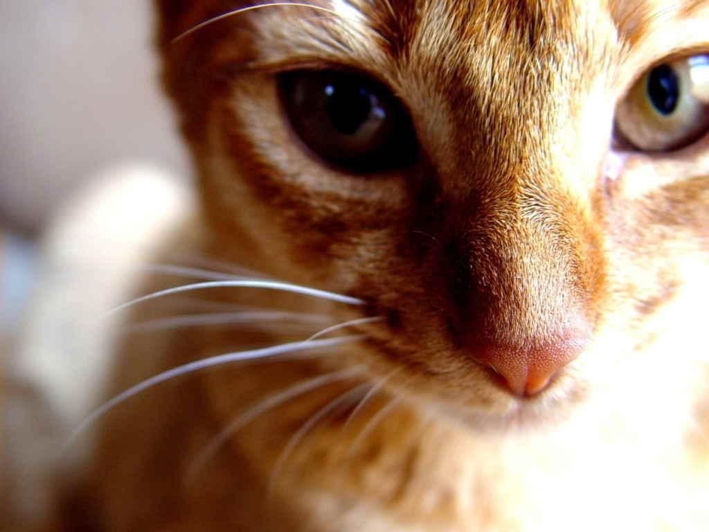 Кошка мурлыкает