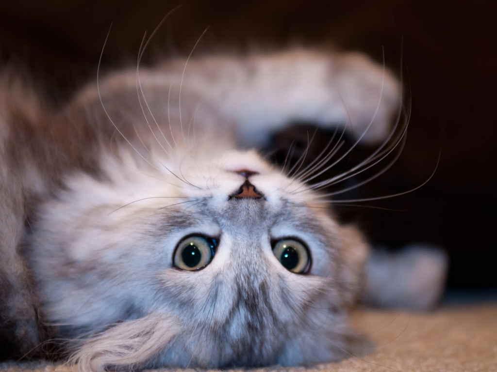 Кошка на спине