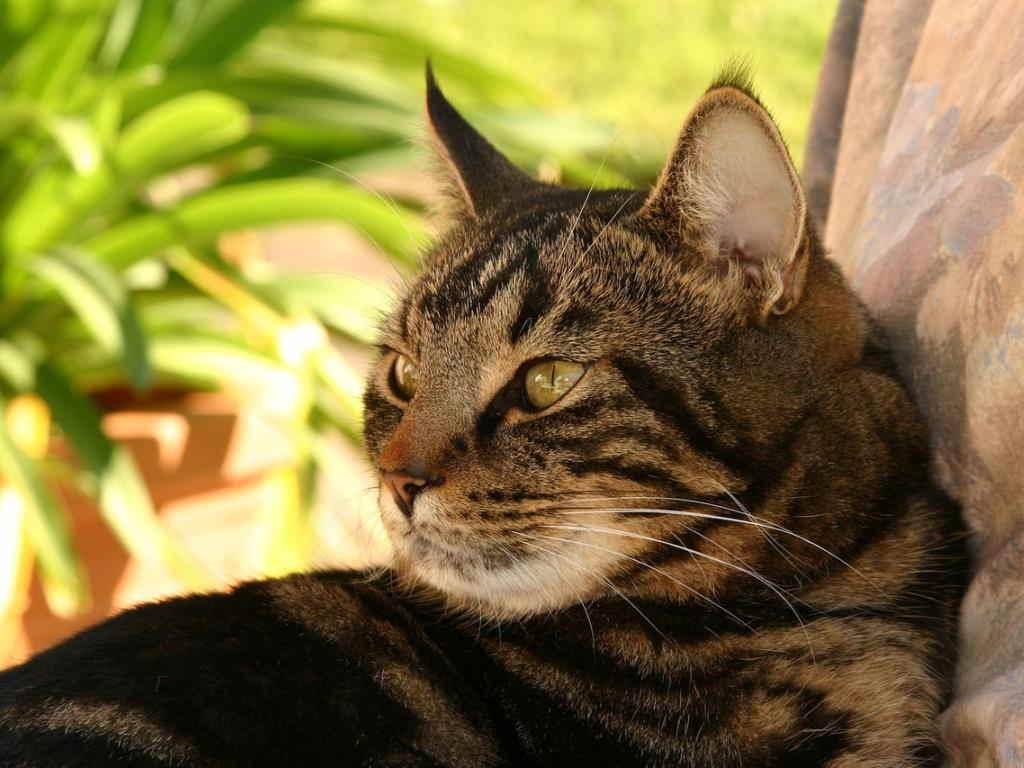 Кошка в тени