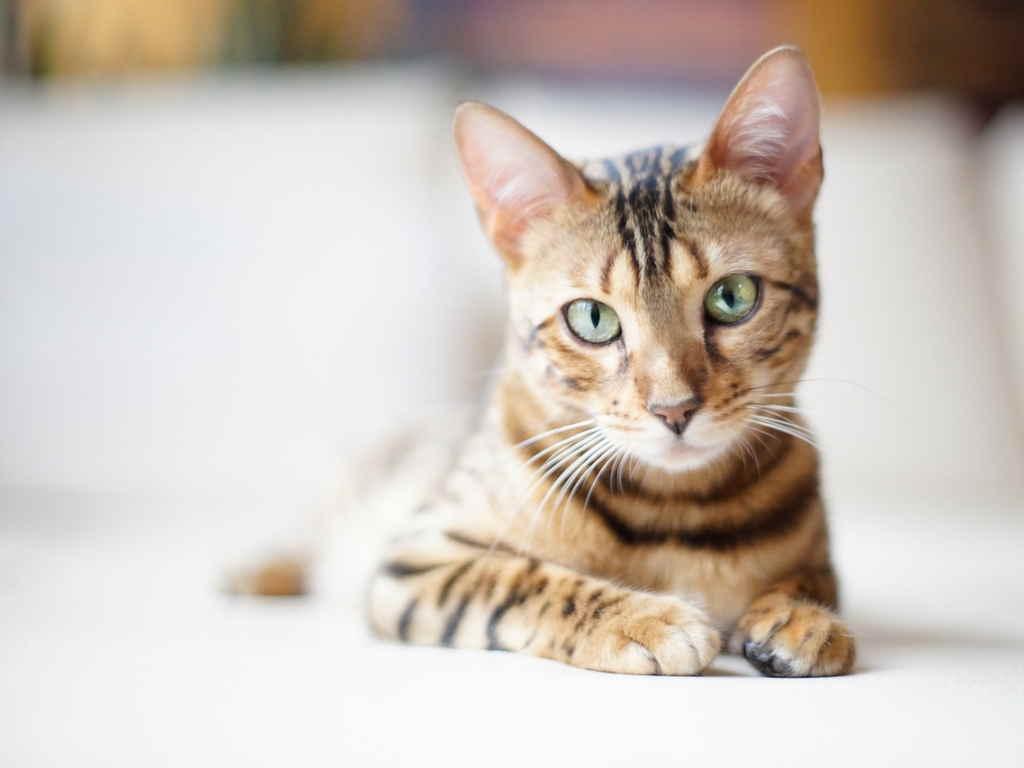 Кошка на отдыхе