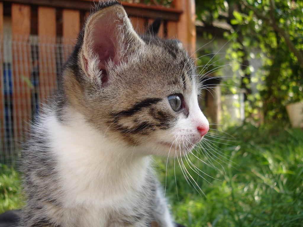 Котенок смотрит