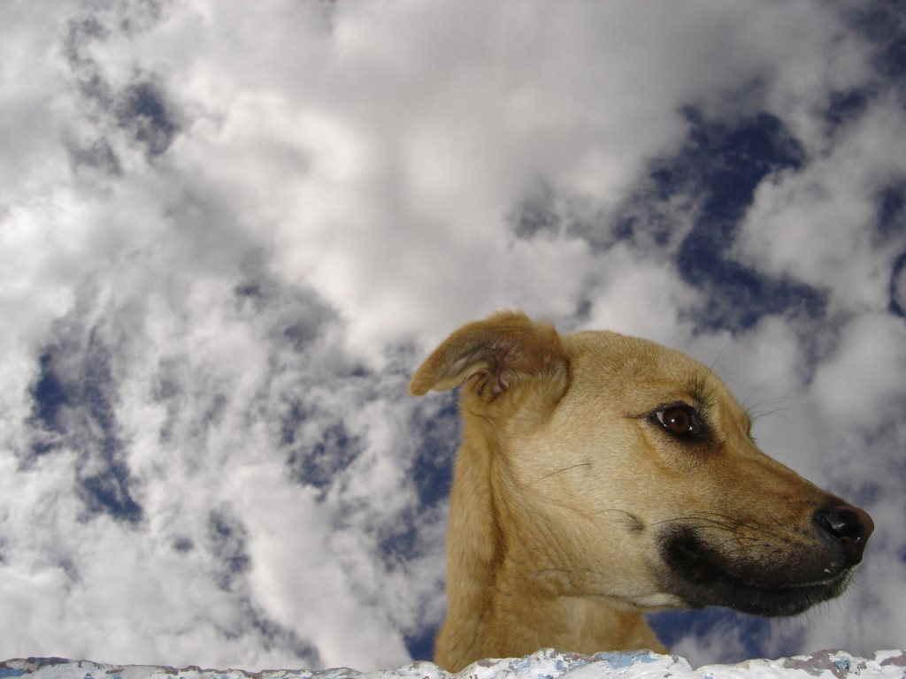 Собака и небо