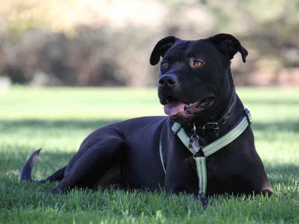 Собака в парке