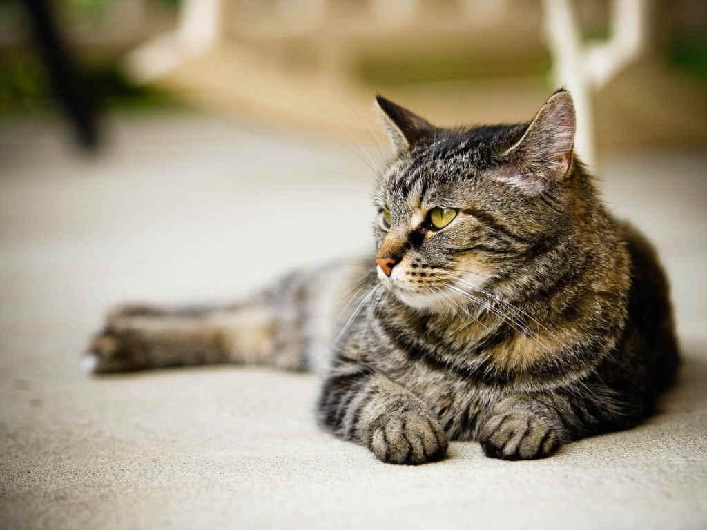 Кошка отдыхает