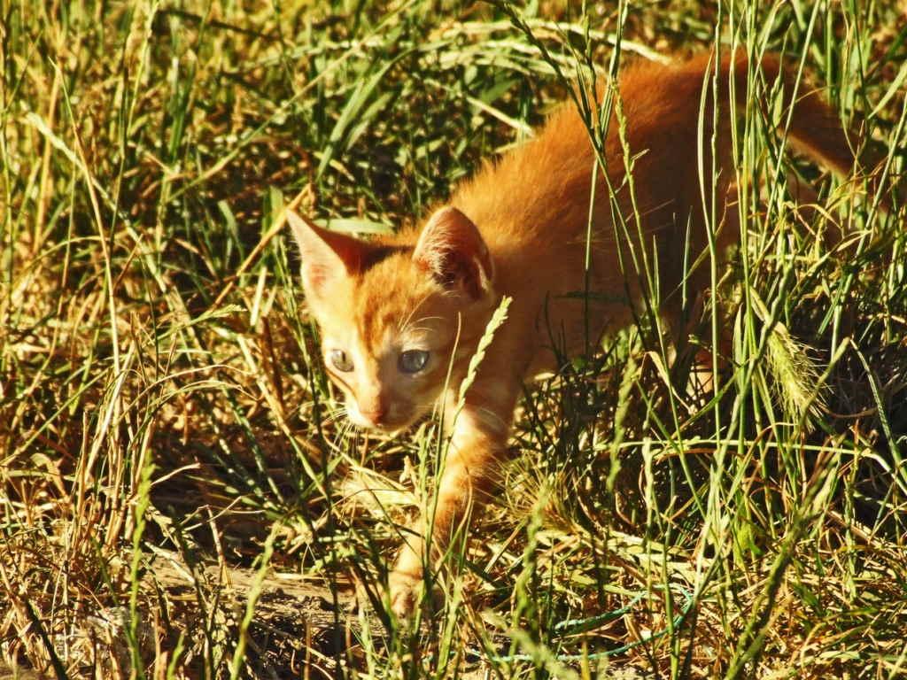 Котенок на охоте