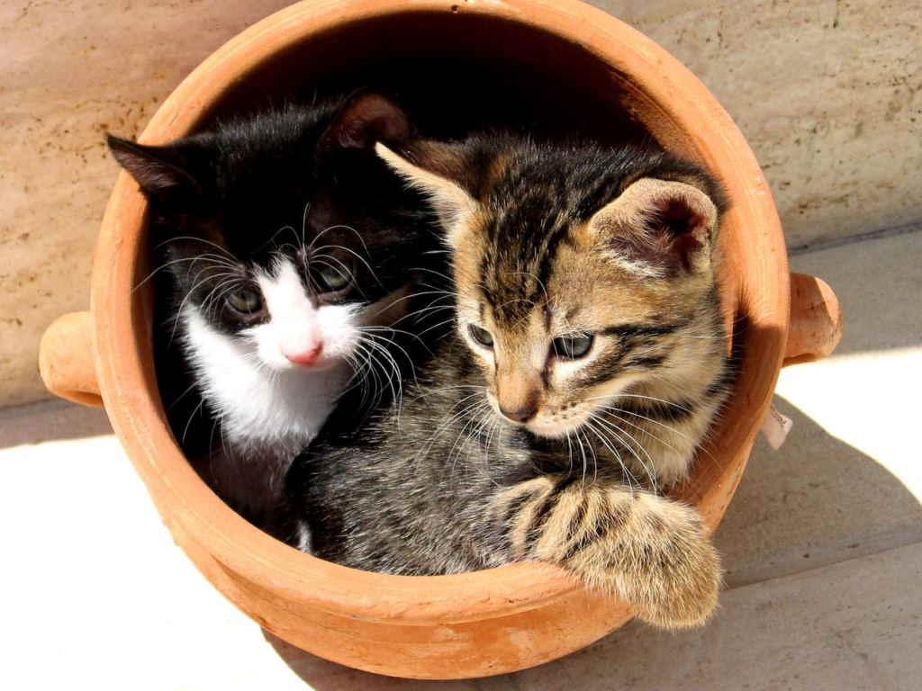 Котята в вазе