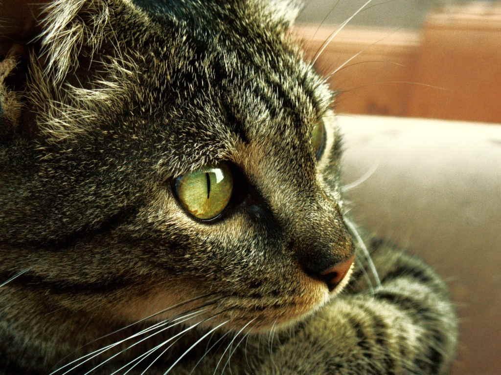 Кот задумался