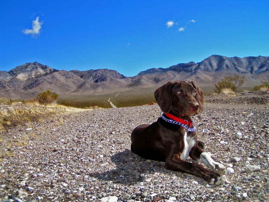 Собака и горы