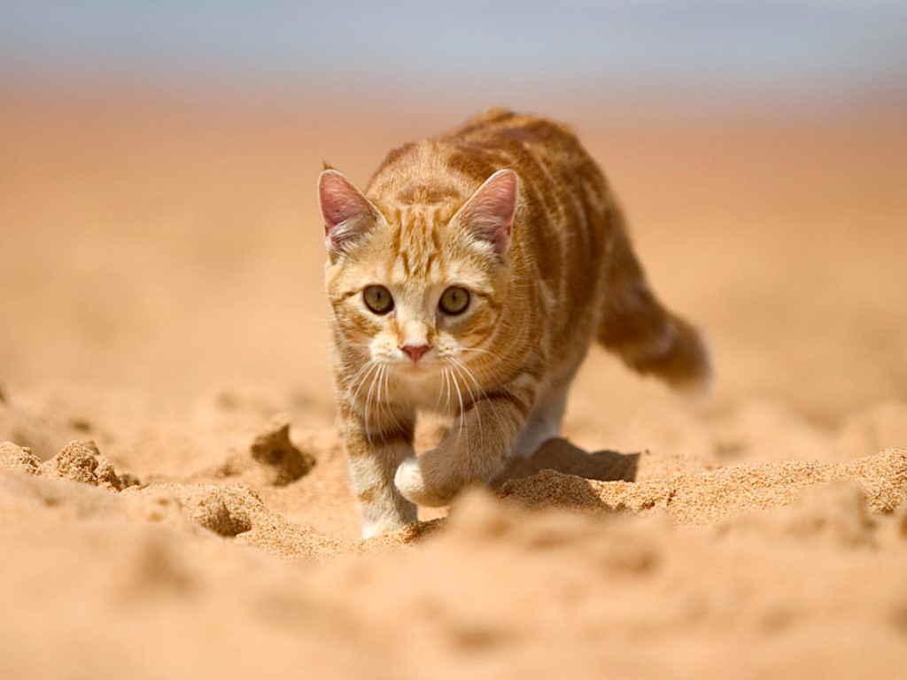 Котенок на песке