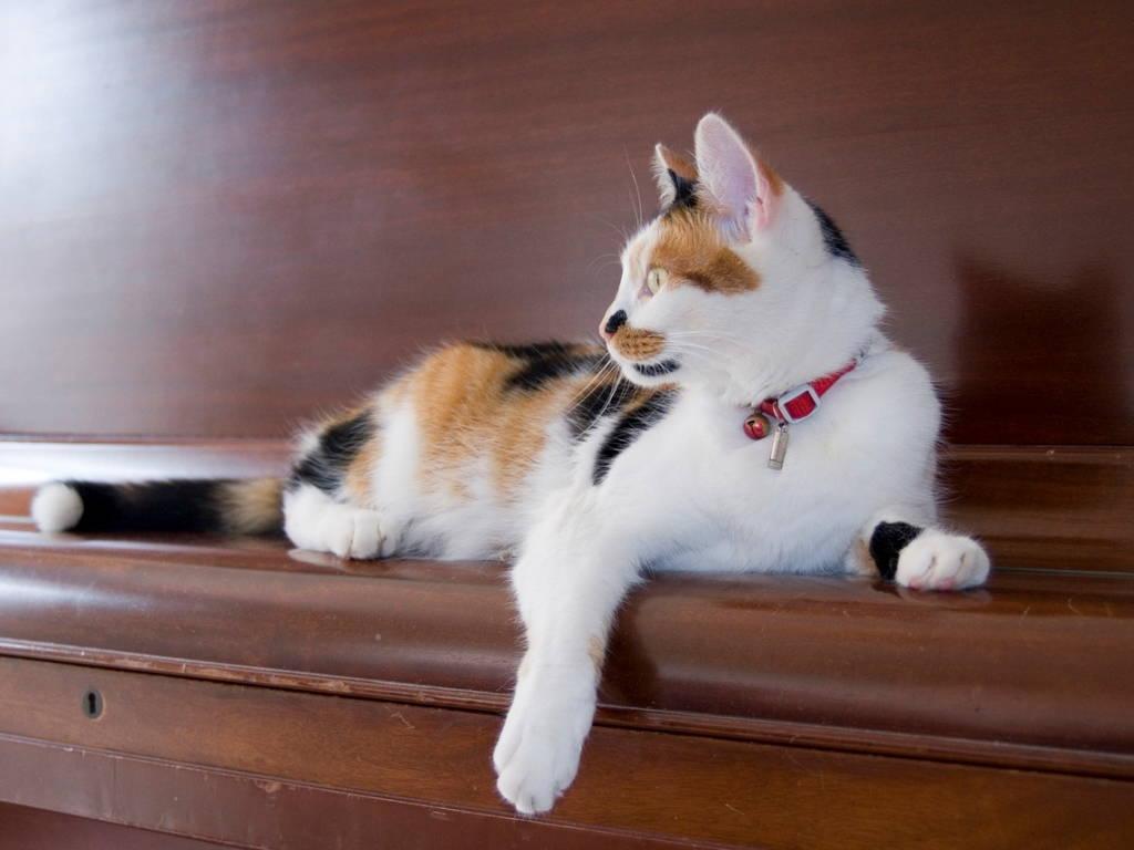 Кошка на пианино