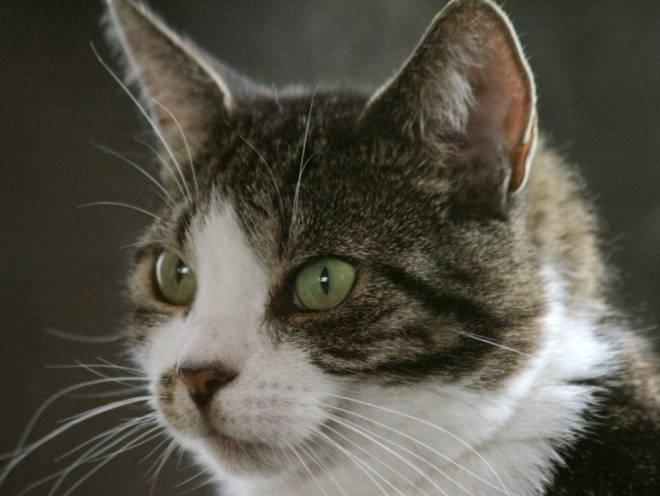 Взгляд у кошки