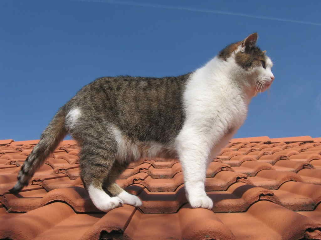 Кот на крыше