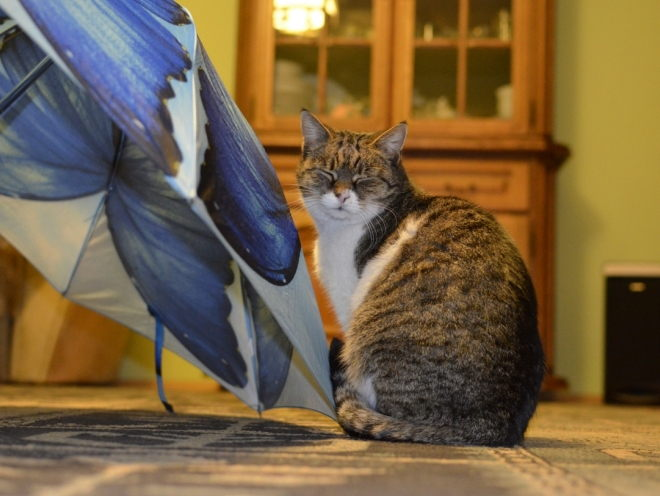 Кошка и зонтик