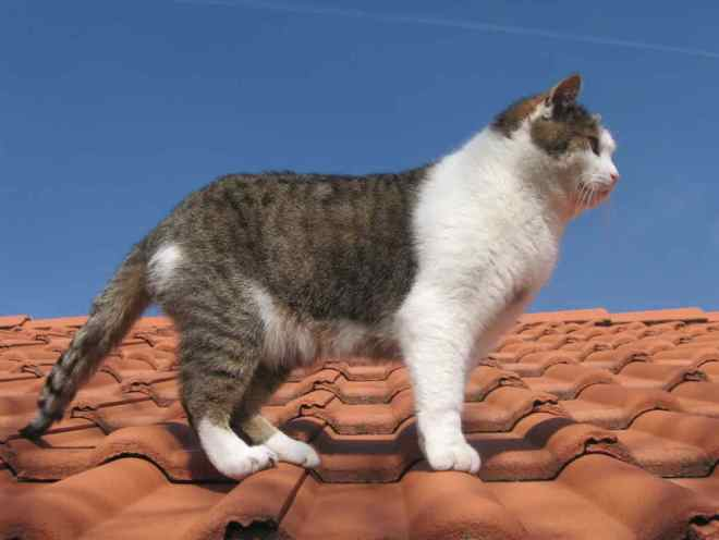 Кошка ходит по крыше