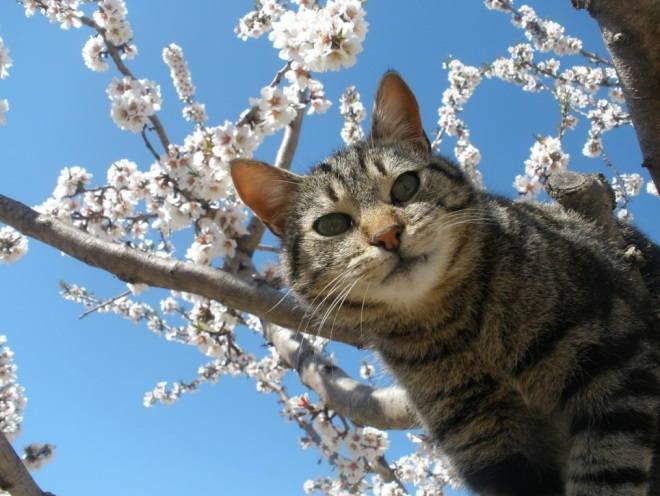 Кот на дереве