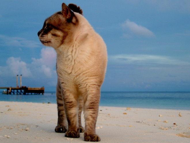 Кошка гуляет по песку