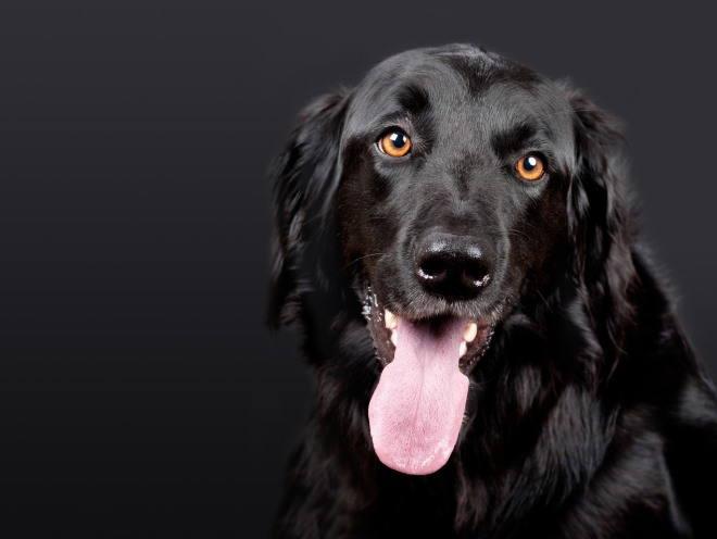 Черная собака смотрит