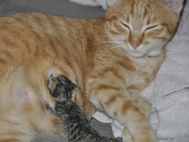 Кошка кормит своего малыша