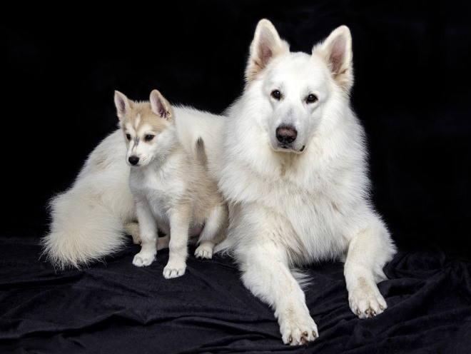 Собака со своим щенком отдыхает