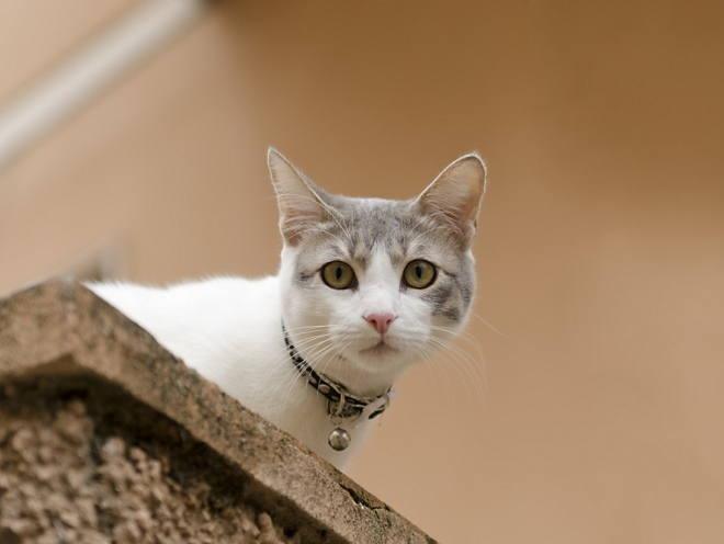 Кошка сидит наверху и смотрит