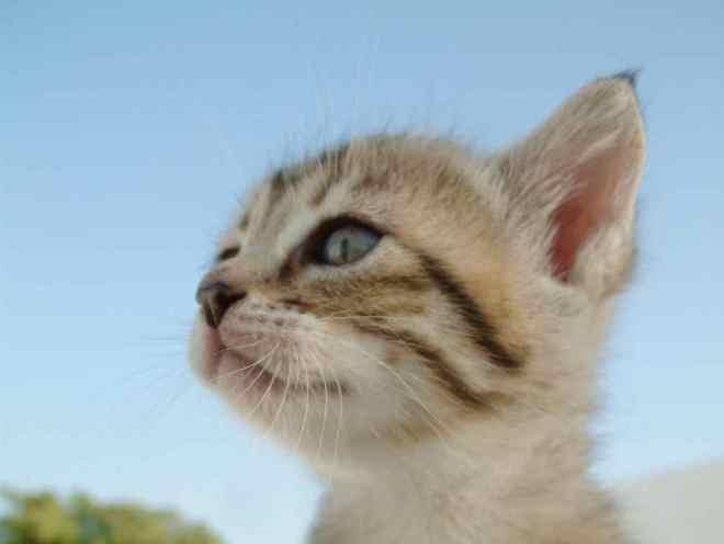 Котенок после чистки ушей