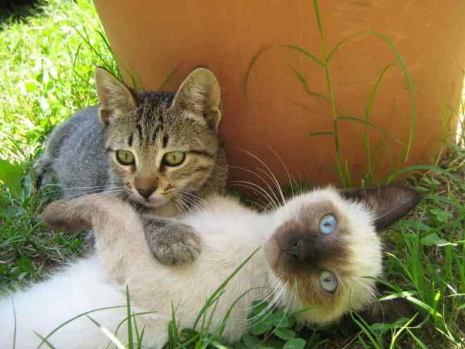 Котята вместе играют на улице