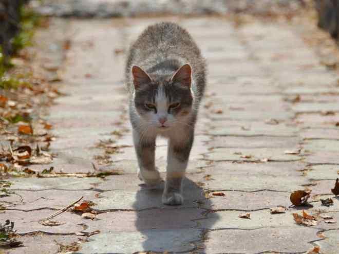 Уличный кот идет по дорожке