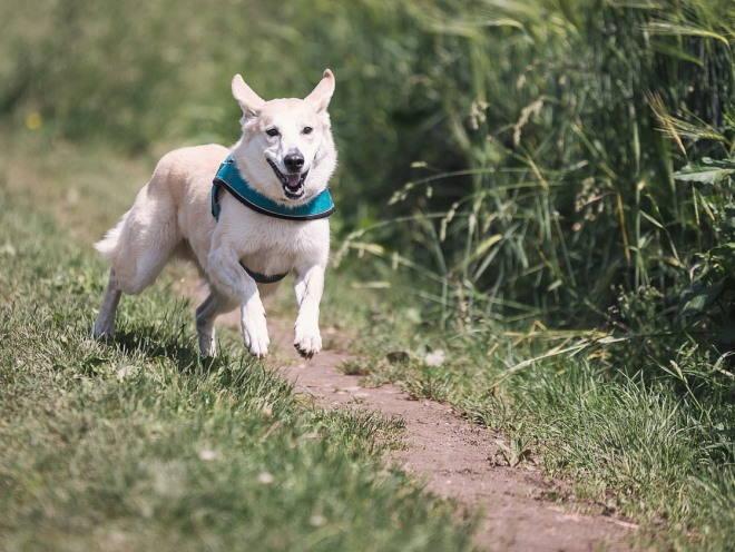 Радостная собака бегает по улице