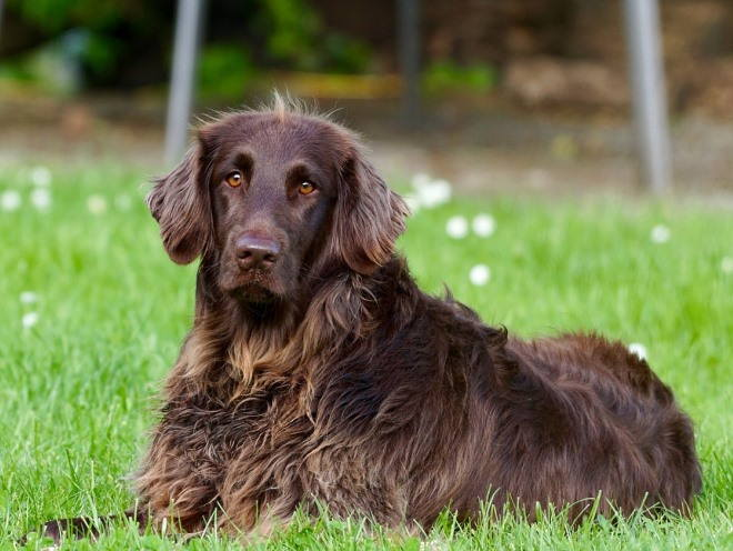 Большая собака отдыхает на улице