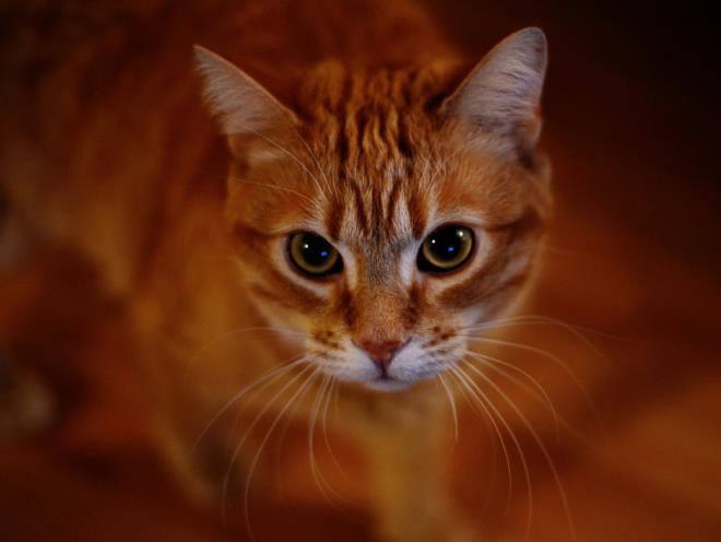 Кот с испуганным взглядом