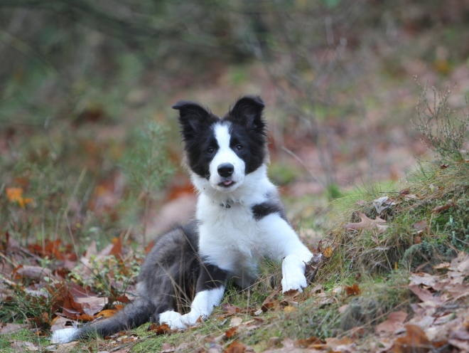 Собака во время прогулки в лесу